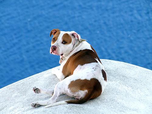 καλοκαιρι κινδυνοι σκυλος γατα ζωα