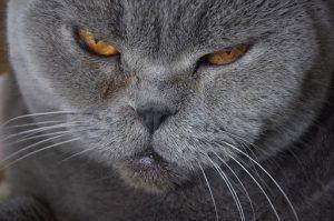 446a65850c8b Όταν η γάτα μου αρχίζει να γερνάει. Η διατροφή της γέρικης γάτας και η  σημασία της σωστής τροφής ποιές ασθένειες εμφανίζουν οι γέρικες ...