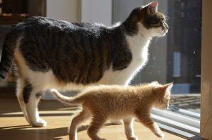 aedca11ab3ce Κτηνιατρικό κέντρο γάτας  Αντισύλληψη σε γάτα και σε γάτο. ΣΤΕΙΡΩΣΗ   ! …  Πρέπει να στειρώσω τα γατιά μου  Στείρωση χειρουργική ή στείρωση με  φαρμακευτικές ...