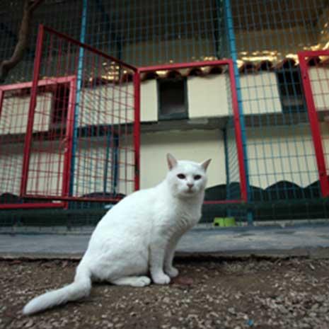 στείρωση γάτας ή ευνουχισμός γάτου