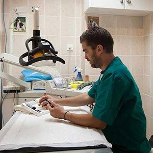 οδοντιατρος ζωων κτηνιατρος - κτηνιατροι οδοντιατροι