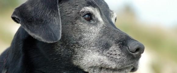 διατροφη ηλικιωμενου σκυλου