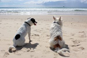 Κίνδυνοι το καλοκαιρί για τα κατοικία ζώα. Κίνδυνοι για σκύλο, γάτα κτλ. Παπαϊωάννου Κτηνίατροι. Κτηνιατρικό Κέντρο.