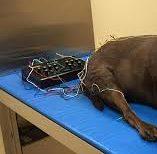 ηλεκτροβελονισμος σε ζωα,  θεραπείες ηλεκτροβελονισμου ζωων