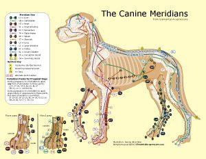 μόνο κτηνίατροι που χρονολογούνται Αστρολογία πινακίδες γνωριμιών