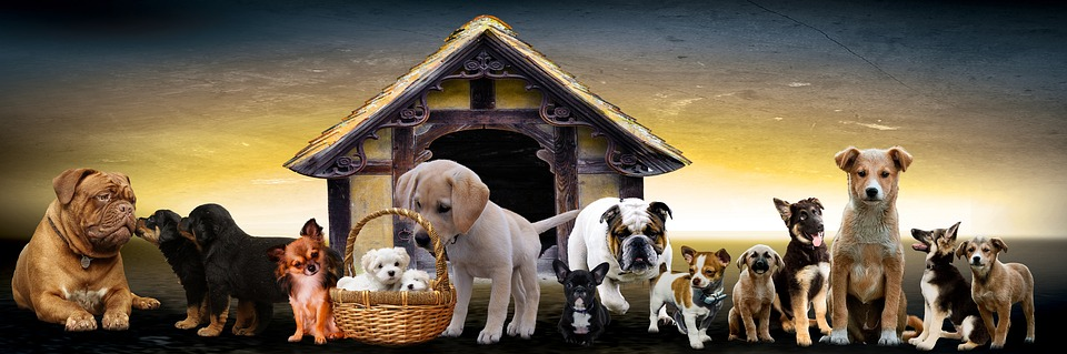 animals kennel - vets.com.gr