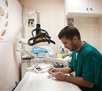 κτηνιατρος οδοντιατρος ζωων